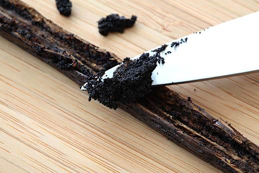 Vanília (Vanilla planifolia)